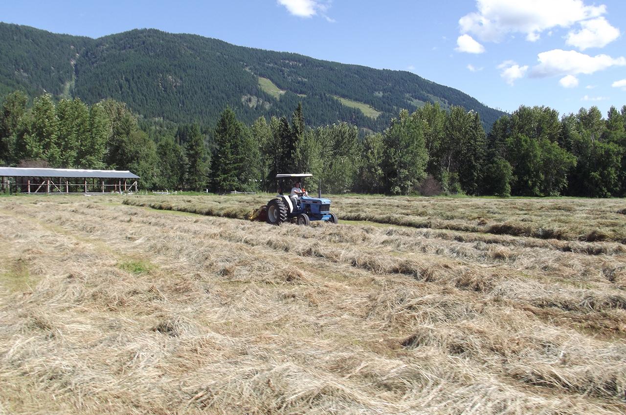 Aveley Ranch Hay