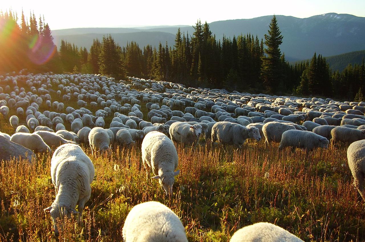Order Fall Lamb