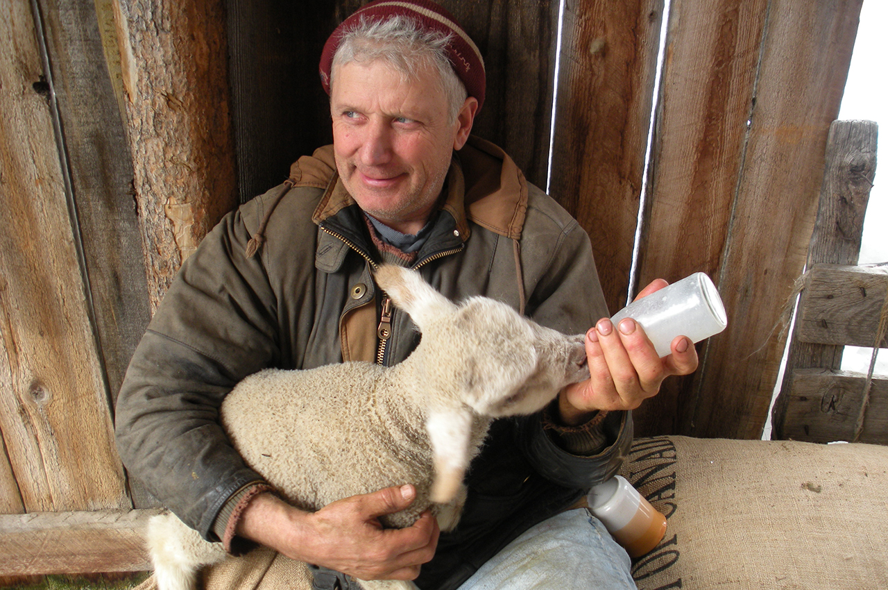 Self Guided Lambing Tours